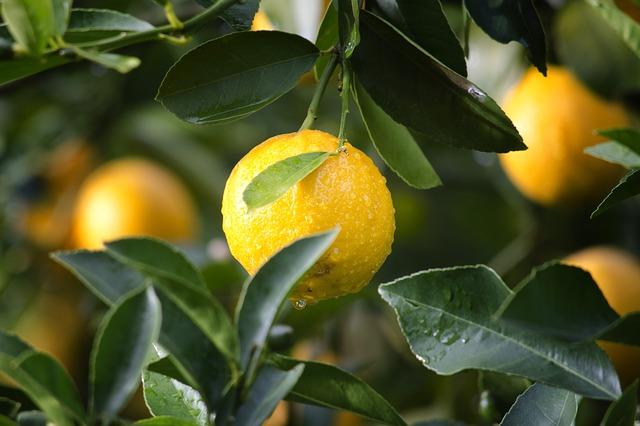 comment laver une machine à laver avec du citron